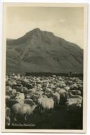 ICELAND : KOLLAFJAROARRJETT / FLOCK OF SHEET - Iceland
