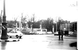 GENEVE  .   LE PARC  ( Photos D' Amateurs FORMAT 13,5 X 8,7 °) - GE Ginevra