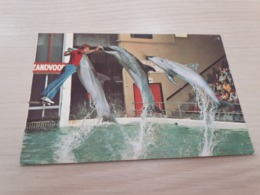 Postcard - Dolfirama Zandvoort     (V 34163) - Animaux & Faune