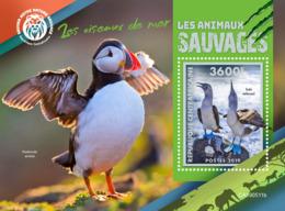 Central Africa 2019  Fauna Sea Birds S201908 - Central African Republic