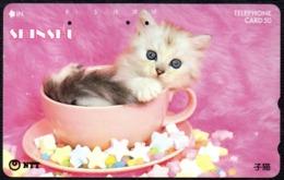 CATS - JAPAN - SHINSHU - NTT -  TELEPHONE CARD 50 - KITTEN IN A CUP - 1990 - USED - Gatti