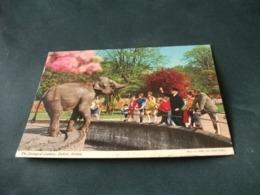 ELEFANTE  ELEPHANT THE ZOOLOGICAL GARDENS DUBLIN IRELAND EIRE - Cavalli