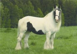 Animals, Horse, Pferde, - Caballos