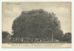 SALUTI DA SENIGALLIA - OLMO BELLO DETTO OLMO DI LANDO  - NV FP - Senigallia