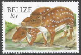Belize. 2000 Wildlife. 10c MNH. SG 1255 - Belize (1973-...)