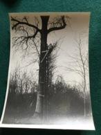 Grande Photo D'un Poilu Sur Un Observatoire Dans Un Arbre 18 X 13 Cm 1914-18 - 1914-18