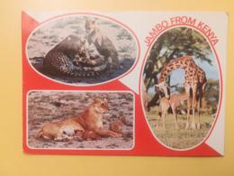 CARTOLINA POSTCARD KENIA KENYA 1980 WILDLIFE NATURA ANIMALI VITA JAMBO BOLLO MINERALI OBLITERE MOMBASA ANNULLO - Kenia