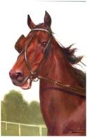 FRNCIOLI - Tête De Cheval - Autres Illustrateurs
