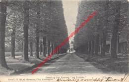 Dreef Op Het Kasteel Ter Linden - G. Hermans - 1905 - Edegem - Edegem