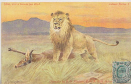 CPA AFRIQUE DU SUD EGERSDORFER  LION - Afrique Du Sud
