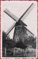 Hamme O/ Durme Oude Molen De Vos Windmolen Windmill Moulin A Vent (In Zeer Goede Staat) - Hamme