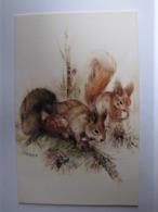 ANIMAUX - Ecureuils - Tierwelt & Fauna
