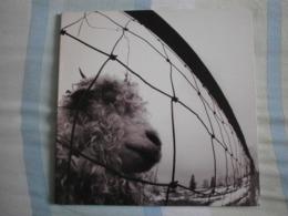 PEARL JAM - Vs - LP - Rock
