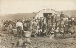 MARNE - Travailleurs Des Vignes - La Taille De La Vigne - Vendanges. CARTE PHOTO - France