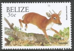 Belize. 2000 Wildlife. 50c MNH. SG 1259 - Belize (1973-...)
