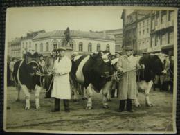 Verviers Belgique Photo De La Place Du Marthyr Presentation De Taureaux  Pour Concours En 1956 - Photos