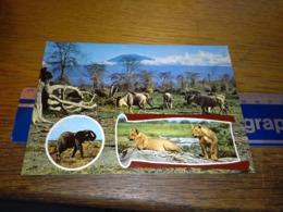148666 WILDLIFE OG KENYA - Kenia