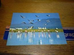 148669  FLAMINGOES AND OTHER BIRD LIFE IN LAKE NAKURU   KENYA - Kenia