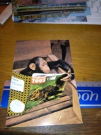 148682 KENYA CHIMPANZEE   OLD POSTCARD CARTOLINA - Kenia
