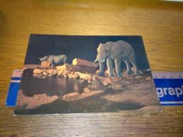 148683 KENYA WILDLIFE OF EAST AFRICA RHINOCEROS & ELEPHANT  OLD POSTCARD CARTOLINA - Kenia
