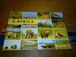 148685 EAST AFRICA  KENYA - Kenia