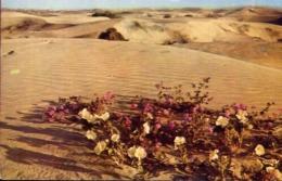 Verbenas In The Sand Dunes - Formato Piccolo Viaggiata – E 13 - Cartoline