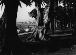 Regio Calabria - REAL PHOTO (12,8 X 17,7 Cm) - Lungomare - Italia - Reggio Calabria