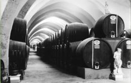 Trapanni - REAL PHOTO (12,0 X 18,2 Cm) - Cantine Stabilimento Florio - Sicilia - Italia - Trapani
