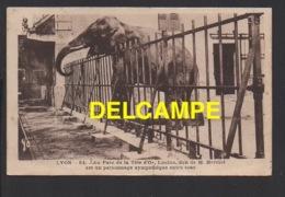 DD / 69 RHÔNE / AU PARC DE LA TÊTE D' OR, L' ÉLÉPHANT LOULOU, DON DE M. HERRIOT / 1938 - Unclassified