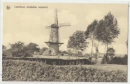 LOENHOUT, Sindsdien Verminkt (windmolen, Moulin à Vent, Wustwezel) - Wuustwezel