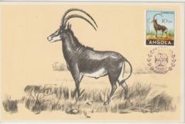Angola Carte Maximum 1953 Hippotrague 358 - Angola