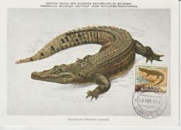 Angola Carte Maximum 1953 Crocodile 361 - Angola
