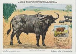 Angola Carte Maximum 1953 Buffle 368 - Angola
