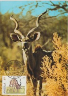 Angola Carte Maximum 1985 Antilope 689G - Angola