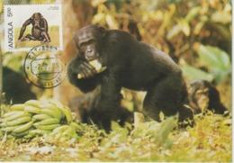 Angola Carte Maximum 1985 Chimpanzé 689I - Angola