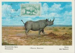 Rio Muni Carte Maximum 1964 Rhinocéros 53 - Riu Muni