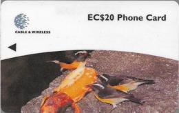 Dominica - Bananaquit, 248CDMB, 1998, 14.000ex, Used - Dominica