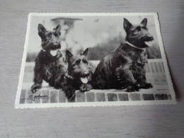 Chiens ( 565 )   Chien  Honden  Hond - Chiens