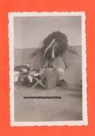ALPINI Alleghe Scherzi Da Caserma..1935 Branda ...con Corona Di Fiori ... - Guerra, Militari