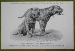 Race DOGUE DE BORDEAUX - BUFFALO Et SULTAN- 1er Prix, Exposition Canine De Paris, à M. Ch. EISLER - Perros