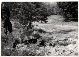 Photo Originale Militaires Allemands & Tir Au Fusil Mitrailleur En Tenue Camouflage - Guerre, Militaire