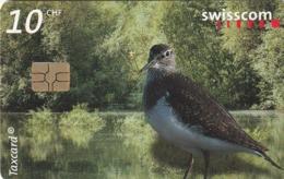 SUIZA. AVES. Birds Love Alluvial Zones, You Too?. 07/02. SUI-CP-125. (281). - Pájaros