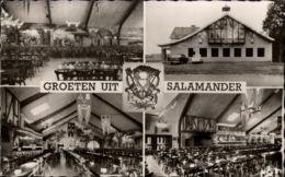! Ansichtskarte Aus  Buggenhout Bos, Groeten Uit, Bierhalle Salamander, 1959, Ostflandern, Belgien - Buggenhout