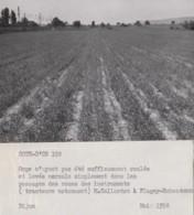 Flagey-Echézeaux 21 - Agriculture - Orge - Ferme Propriété M. Collardot - Photographie - Francia