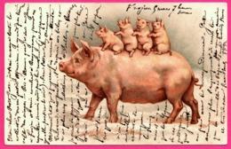Pig - Cochon Humanisé Avec Bébé Sur Le Dos - Porcelet - Truie - Bébés - 1904 - Schweine