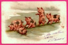 Pig - Cochons Jouant Dans La Boue - Cochon - Pigs - Cerdos