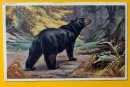 8925 - Black  Bear - Osos