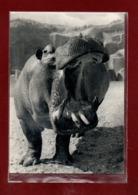 75-CPSM PARIS - PARC ZOOLOGIQUE - HIPPOPOTAME - Hippopotamuses