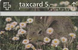 SUIZA. Rabbit. 624A. 04/1996. S053.A-P53. (317). - Conejos