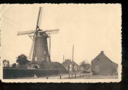 Hoogstraten - Molen - 1930 - Belgio